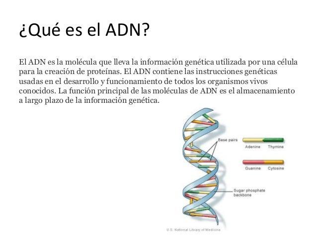 duplicacion del adn catabolico o anabolico