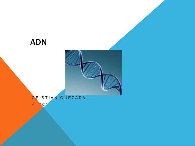 """ADN  CRISTIAN QUEZADA 4  """"C"""""""