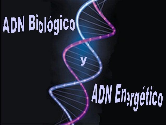 El ADN o ácido desoxirribonucleico funciona como un almacén que contiene toda la información del material genético present...