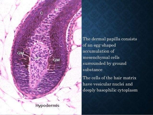 TRICHOGENIC TUMOURS 1. Trichoepithelioma 2. Desmoplastic Trichoepithelioma 3. Trichofolliculoma 4. Trichoblastoma 5. Cutan...