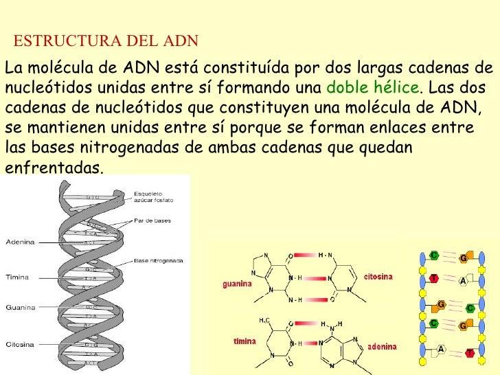 Adn Replica Transcr Traducc