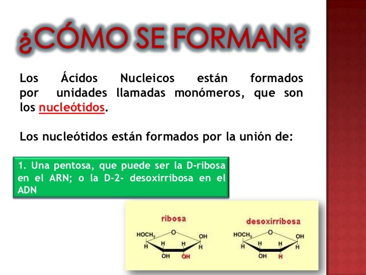 Cidos nucleicos adn y arn for Como estan formados los suelos