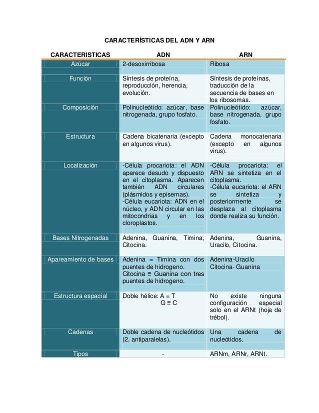 CARACTERÍSTICAS DEL ADN Y ARN CARACTERISTICAS ADN ARN Azúcar 2-desoxirribosa Ribosa Función Síntesis de proteína, reproduc...