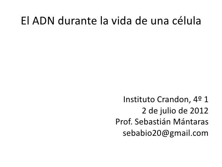 El ADN durante la vida de una célula                    Instituto Crandon, 4º 1                          2 de julio de 201...