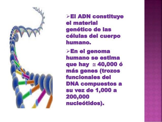 COMPONENTES DEL ADN Acido fosfórico Desoxirribosa Bases nitrogenadas Timina Citosina Adenina Guanina