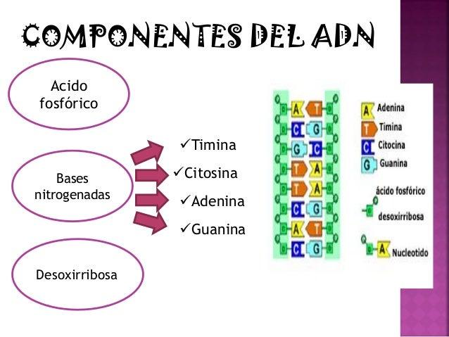 PRUEBAS DE PATERNIDAD CON ADN