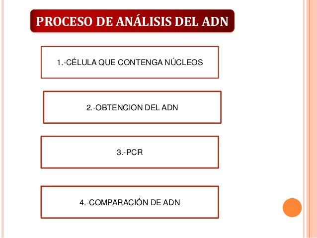 PROCESO DE ANÁLISIS DEL ADN 1.-CÉLULA QUE CONTENGA NÚCLEOS  2.-OBTENCION DEL ADN  3.-PCR  4.-COMPARACIÓN DE ADN