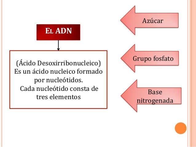 Azúcar  EL ADN  (Ácido Desoxirribonucleico) Es un ácido nucleico formado por nucleótidos. Cada nucleótido consta de tres e...