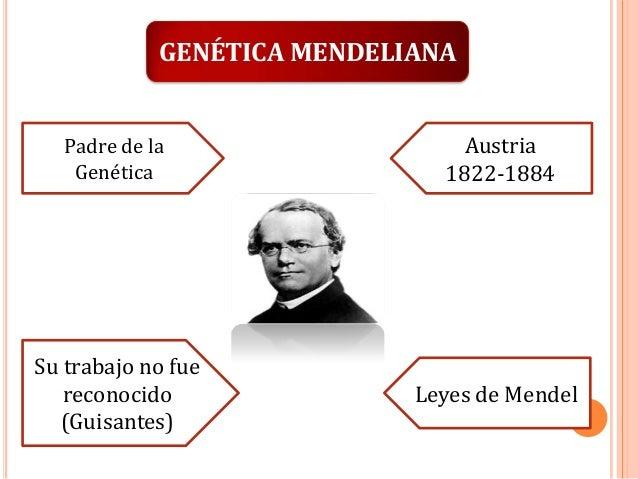 GENÉTICA MENDELIANA Padre de la Genética  Austria 1822-1884  Su trabajo no fue reconocido (Guisantes)  Leyes de Mendel