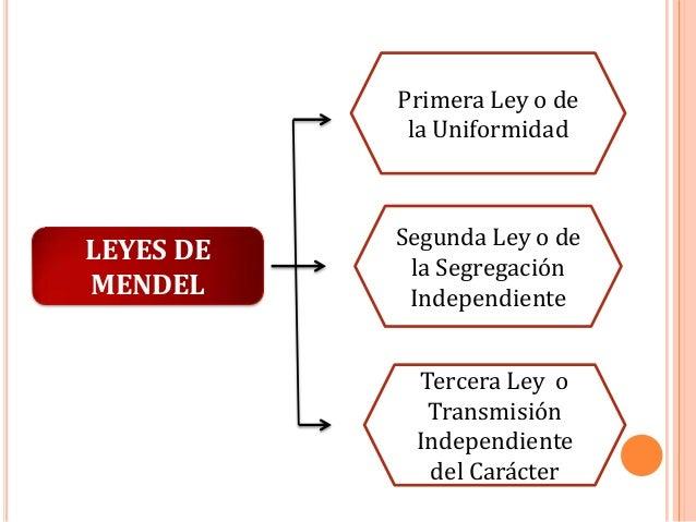 Primera Ley o de la Uniformidad  LEYES DE MENDEL  Segunda Ley o de la Segregación Independiente Tercera Ley o Transmisión ...