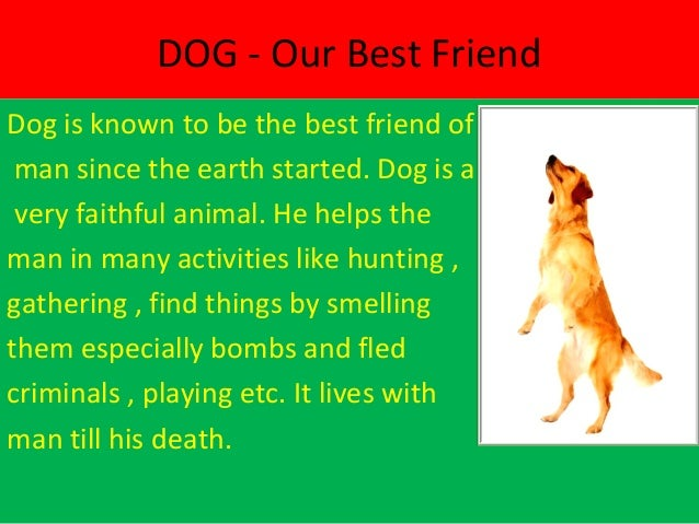 dog a faithful animal essay