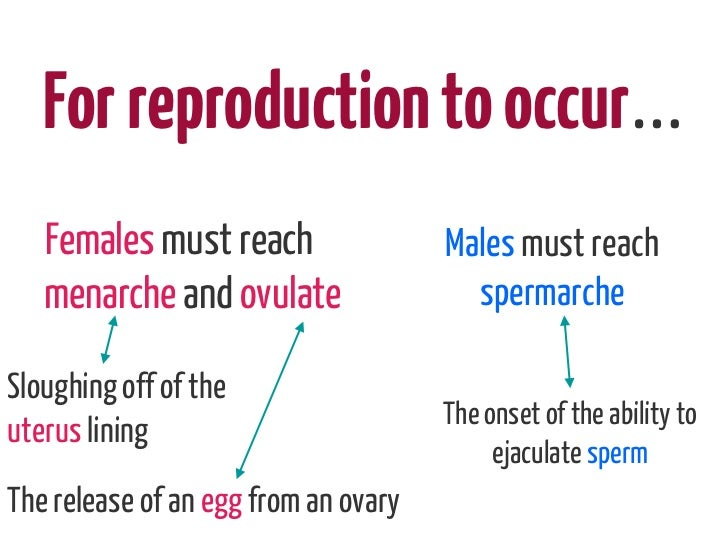 For reproduction to occur…   Females must reach                 Males must reach   menarche and ovulate                 sp...