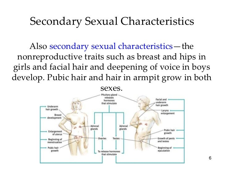 Characteristics of secondary sexual changes in humans