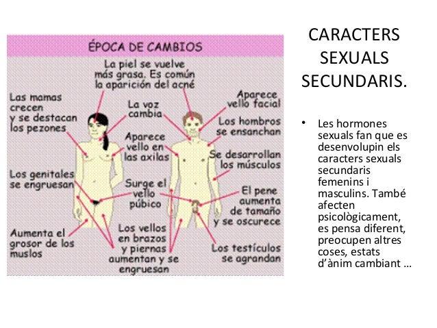 Oq e ser heterosexual meaning