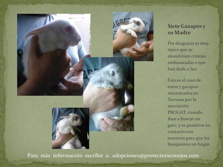 Por desgracia es muy típico que se abandonen conejas embarazadas o que han dado a luz. <br />Éste es el caso de estos 7 ga...