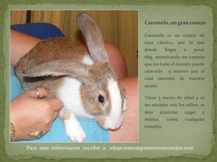 Caramelo, un gran conejo<br />Caramelo es un conejo de raza cárnica, por lo que puede llegar a pesar 6kg, necesitando un e...