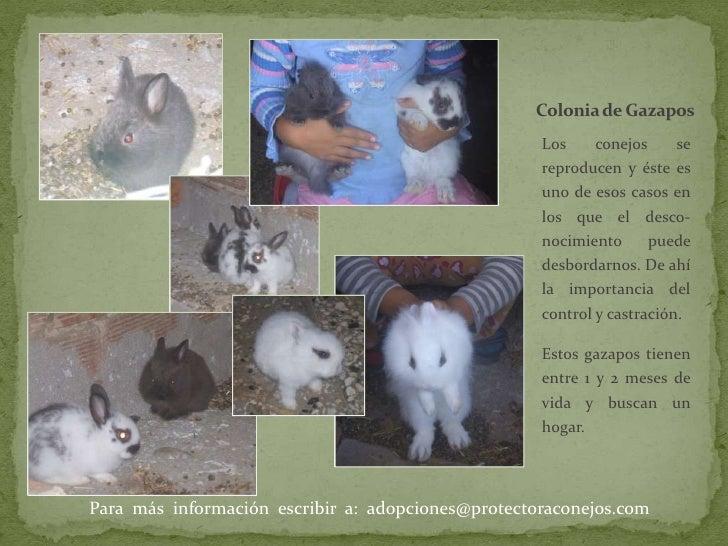 Colonia de Gazapos<br />Los conejos se reproducen y éste es uno de esos casos en los que el desco-nocimiento puede desbord...