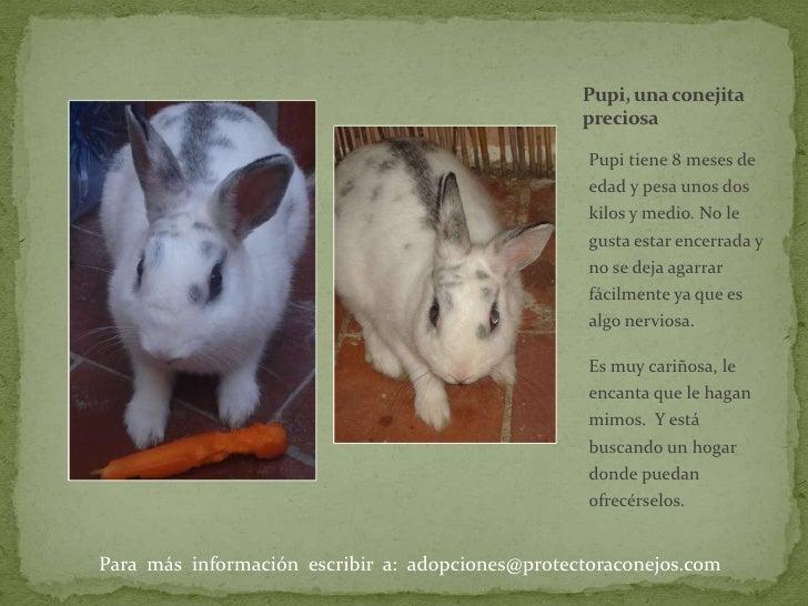 Pupi, una conejita  preciosa<br />Pupi tiene 8 meses de edad y pesa unos dos kilos y medio. No le gusta estar encerrada y ...