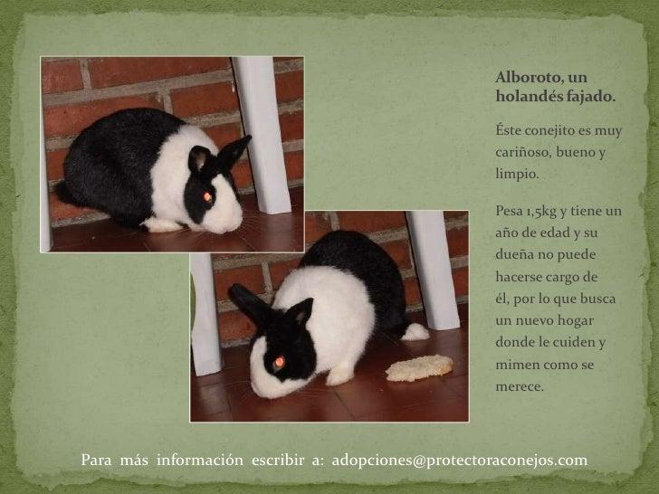 Éste conejito es muy cariñoso, bueno y limpio. <br />Pesa 1,5kg y tiene un año de edad y su dueña no puede hacerse cargo d...