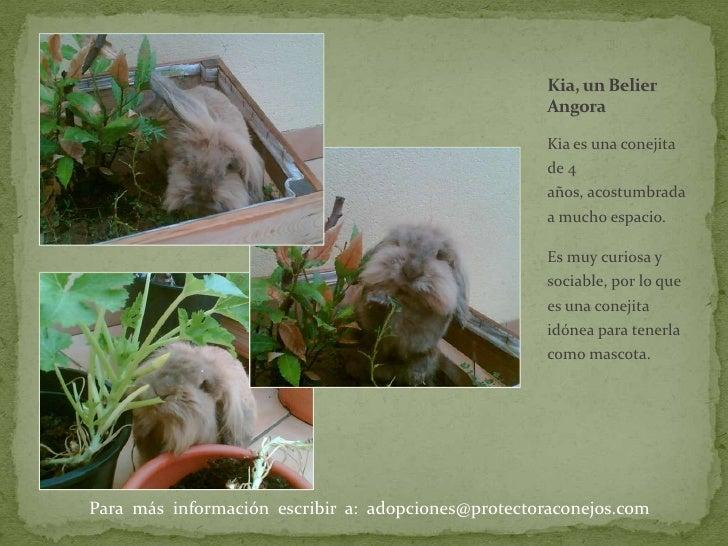 Kia es una conejita de 4 años, acostumbrada a mucho espacio. <br />Es muy curiosa y sociable, por lo que es una conejita i...