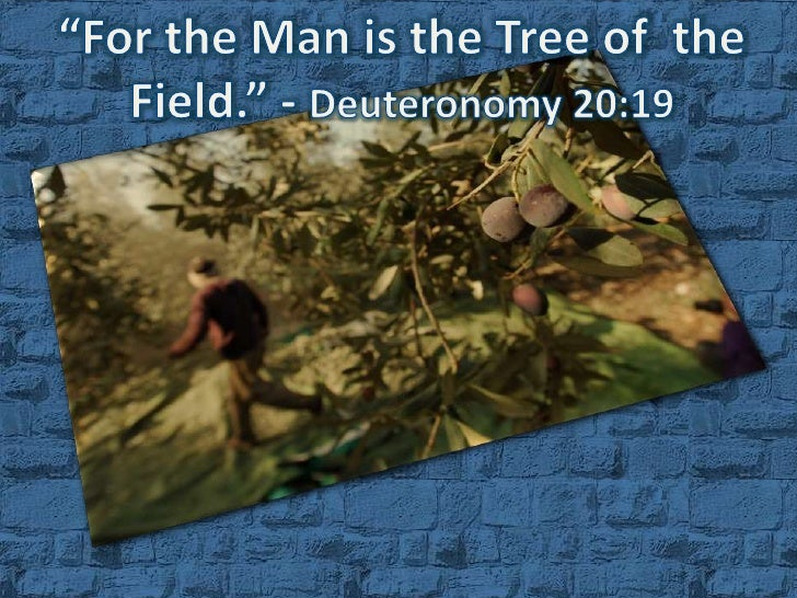 """For the Man is the Tree of  the Field."" - Deuteronomy 20:19<br />"