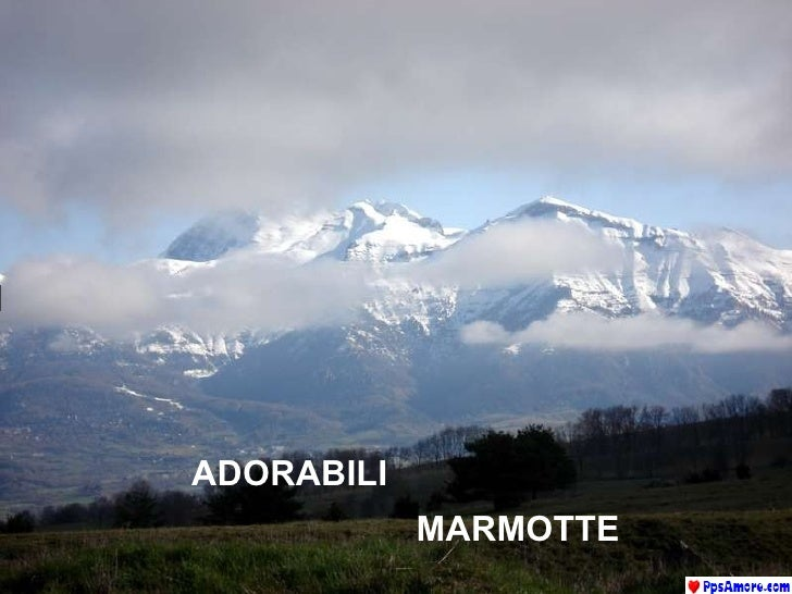 ADORABILI  MARMOTTE