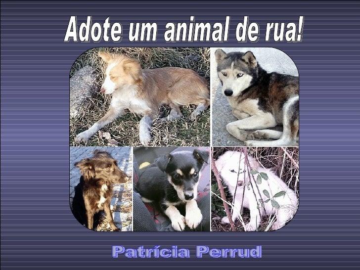 Adote um animal de rua! Patrícia Perrud