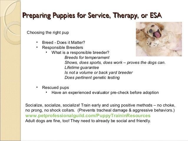 11 preparing puppies for service