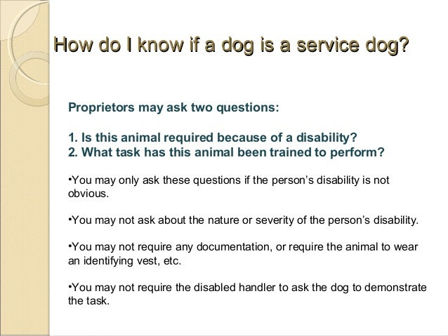 service dogs  therapy dogs  emotional support animals