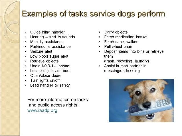 Depression Anxiety Service Dog Tasks