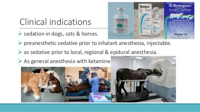 adrenergic agonists  u0026 antagonists in veterinary medicine