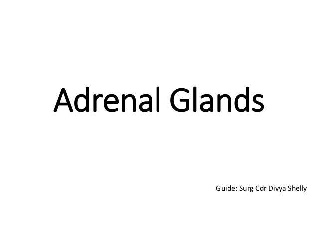 Adrenal Glands Guide: Surg Cdr Divya Shelly