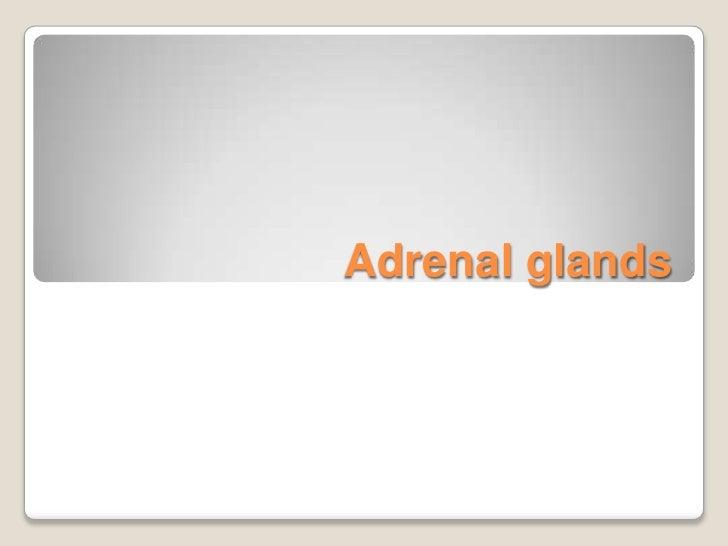 Adrenal glands<br />