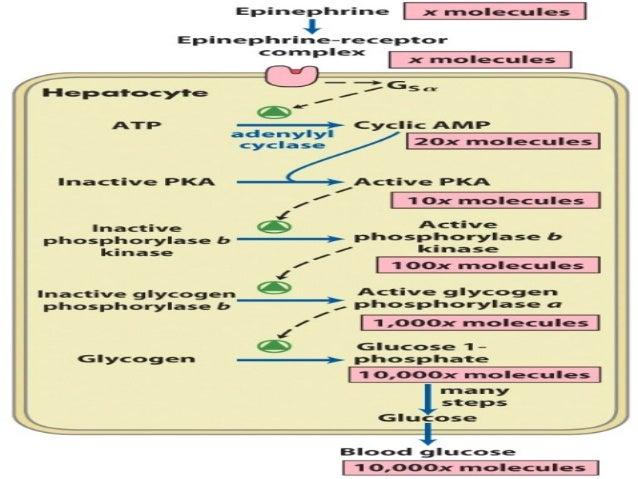 Adrenal Sex Hormones 117