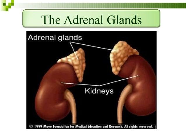 Adrenal insufficiency Slide 3