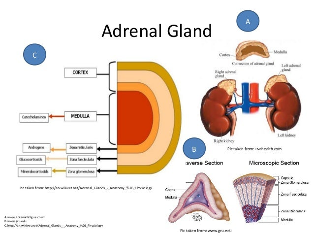 Disorder Of Adrenal Gland Adrenal Insufficiency