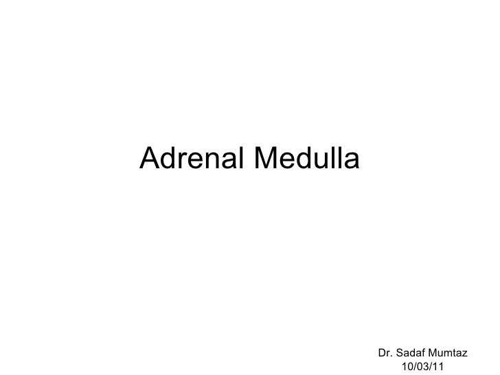 Adrenal Medulla Dr. Sadaf Mumtaz 10/03/11