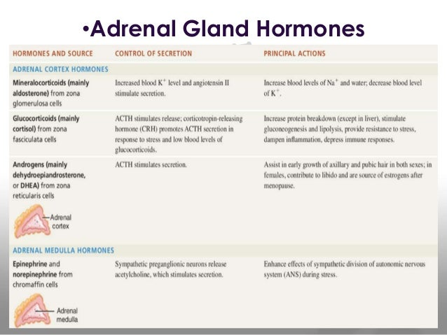 Adrenal Pacreas Reproductive Glands