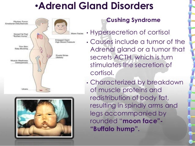 Adrenal, pacreas, reproductive glands