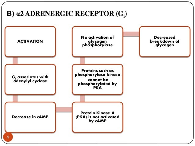 controvery of adrenergic agonists essay Alpha-2 agonists appear to be most effective in suppressing autonomically mediated signs and symptoms of abstinence, but they are less effective for subjective symptoms two cochrane reviews compared the efficacy of alpha-2 adrenergic agonists to methadone or buprenorphine for management of withdrawal.