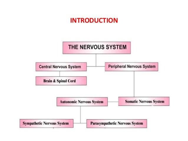 Adrenergic receptors and its modulators Slide 2