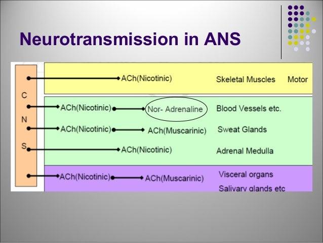 Adrenergic Drugs - drdhriti Slide 2