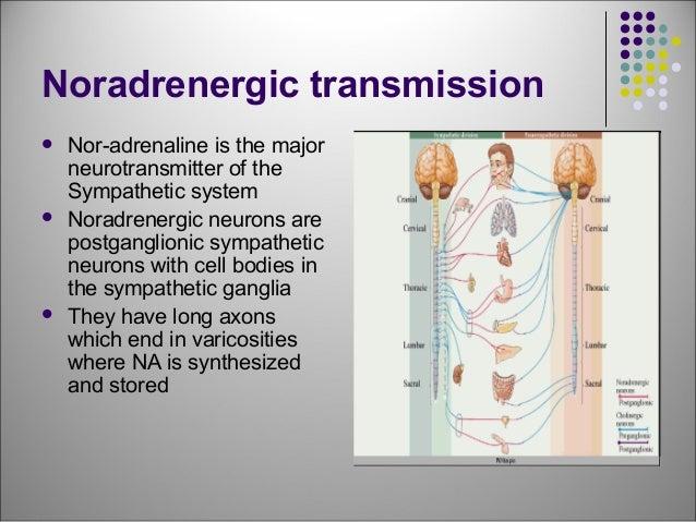 Adrenergic Drugs - drdhriti Slide 3