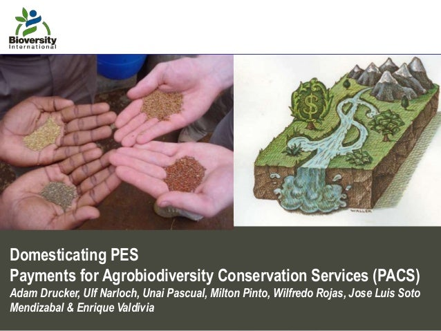 Domesticating PES Payments for Agrobiodiversity Conservation Services (PACS) Adam Drucker, Ulf Narloch, Unai Pascual, Milt...