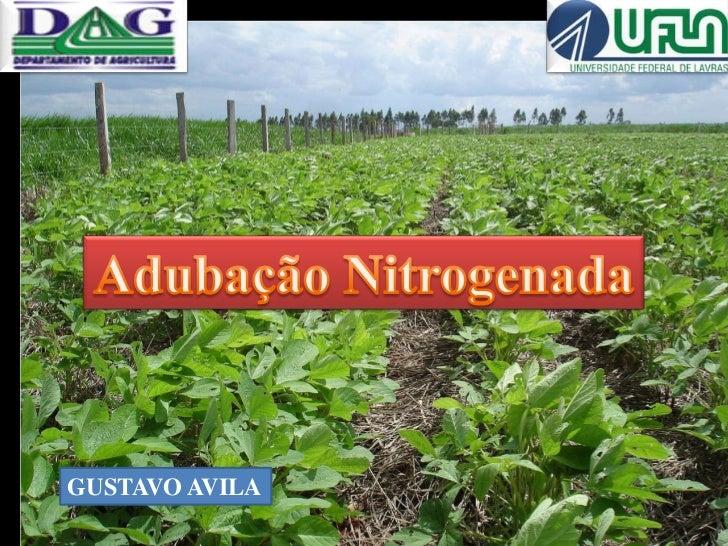 Adubação Nitrogenada<br />GUSTAVO AVILA<br />