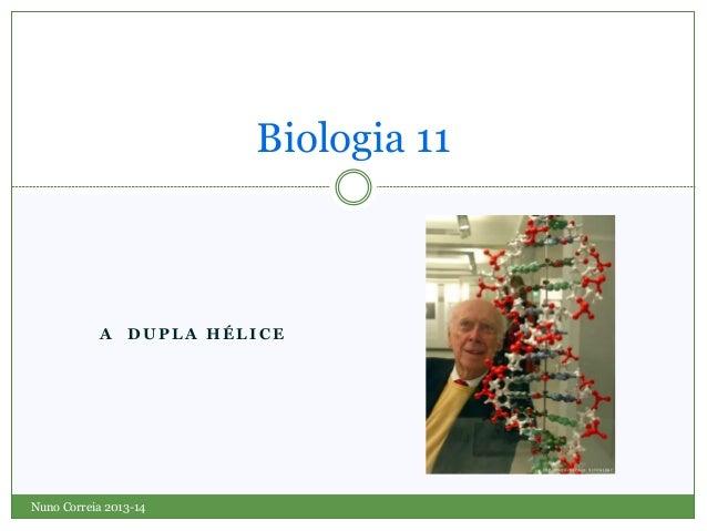Biologia 11  A DUPLA HÉLICE  Nuno Correia 2013-14