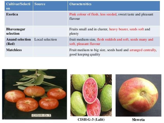Advances in breeding of guava