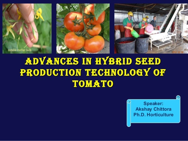 Advances in hybrid seed production of tomato