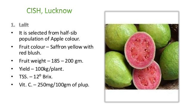 Advances in production of guava