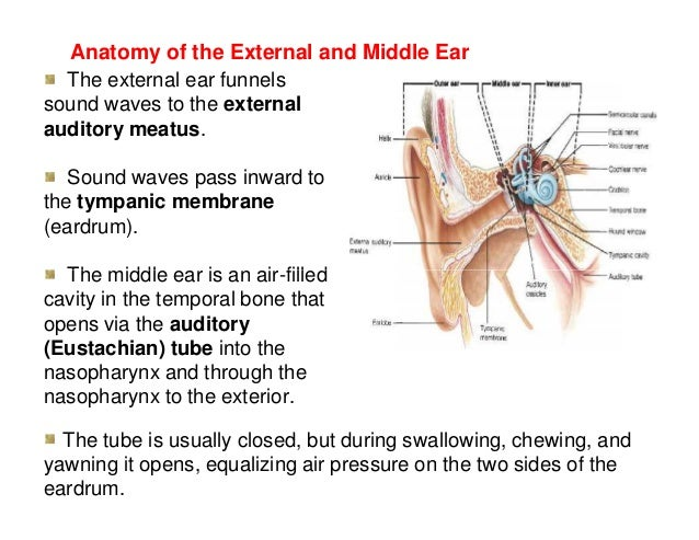 Advance special senses physiology 54 anatomy of the inner ear ccuart Image collections